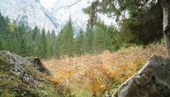 forest_meadows_075.jpg