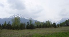 forest_meadows_085.jpg
