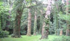 forest_meadows_086.jpg