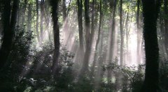 forest_meadows_087.jpg