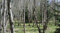 forest_meadows_090.jpg
