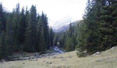 forest_meadows_095.jpg