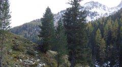 forest_meadows_096.jpg
