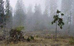 forest_meadows_098.jpg