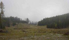 forest_meadows_099.jpg