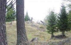 forest_meadows_100.jpg