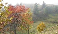 forest_meadows_102.jpg