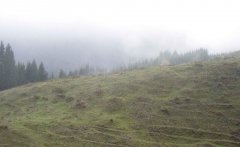 forest_meadows_103.jpg