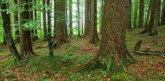 forest_meadows_104.jpg
