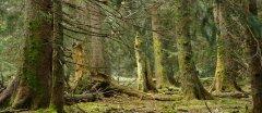 forest_meadows_105.jpg