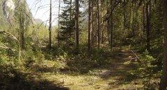 forest_meadows_107.jpg