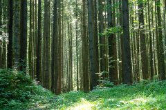 forest_meadows_108.jpg
