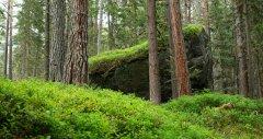 forest_meadows_109.jpg