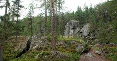 forest_meadows_110.jpg