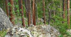 forest_meadows_111.jpg