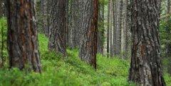 forest_meadows_112.jpg