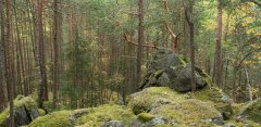 forest_meadows_113.jpg