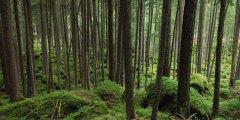 forest_meadows_114.jpg