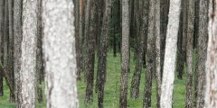 forest_meadows_116.jpg
