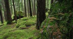 forest_meadows_117.jpg