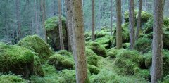 forest_meadows_118.jpg