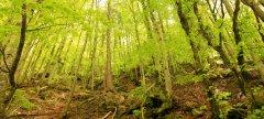 forest_meadows_120.jpg