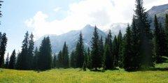 forest_meadows_121.jpg