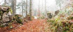 forest_meadows_122.jpg