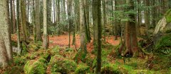 forest_meadows_123.jpg