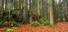 forest_meadows_124.jpg