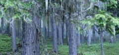 forest_meadows_125.jpg