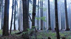forest_meadows_126.jpg