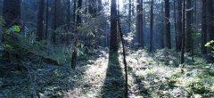 forest_meadows_127.jpg