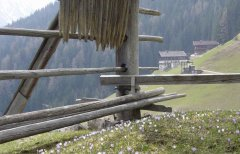 hut_house_110.jpg