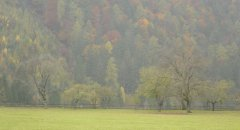 landscape_green_02.jpg