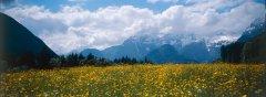 landscape_green_12.jpg