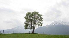 landscape_green_19.jpg