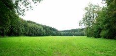 landscape_green_37.jpg