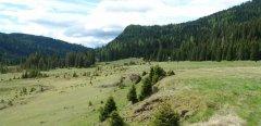 landscape_green_41.jpg