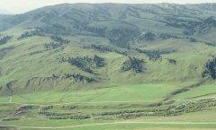landscape_green_56.jpg