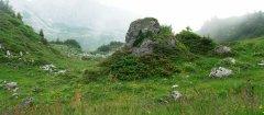 landscape_green_82.jpg