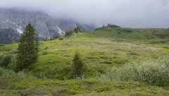 mountains_green_101.jpg
